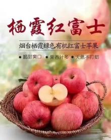 悦云鲜栖霞苹果,净重10斤包邮